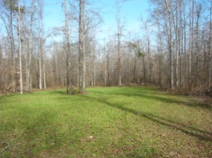 Land for sale, Marion County, GA